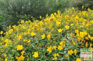 Plante talus persistant