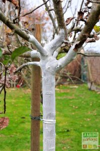 comment faire blanc arboricole