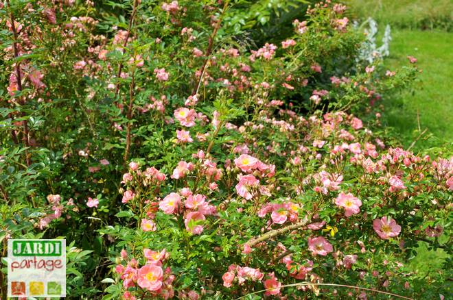 plantes de talus sans entretien