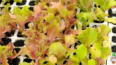 Photo de 30 légumes à semer…Le calendrier des semis et des récoltes
