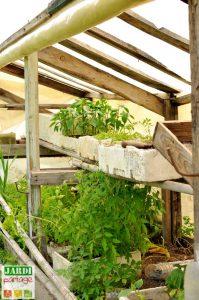 comment faire des semis de legumes