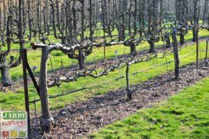 arrosage des arbres fruitiers pendant la floraison