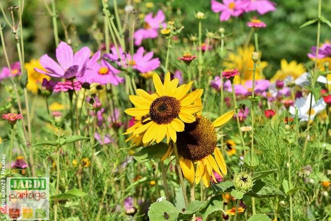 comment faire un jardin fleuri