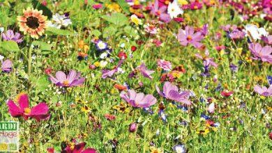 Photo of Avec la prairie fleurie, invitez la diversité dans votre jardin !