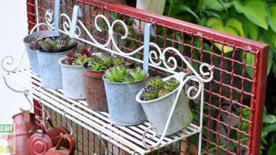 Photo de Plantes grasses: quel entretien effectuer ?