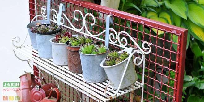 entretien plante grasse