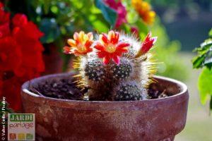 plante grasse entretien