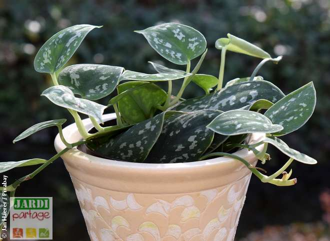 plantes vertes dehors