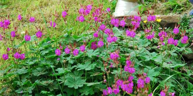 plantes couvre sol ombre