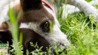 Photo of Comment bien accompagner un chien vieillissant ?