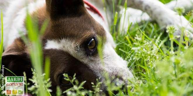 symptomes de vieillissement du chien