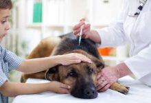 vaccin obligatoire chien