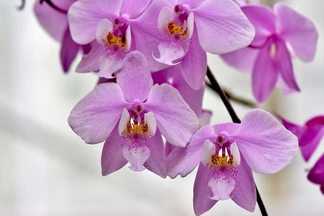 arrosage orchidee en pot
