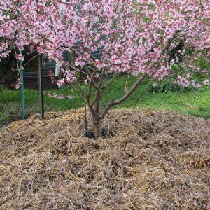 engrais arbres fruitiers bio