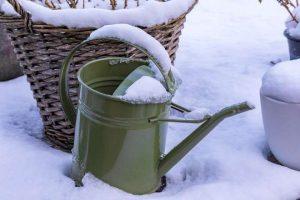 faut-il arroser en hiver