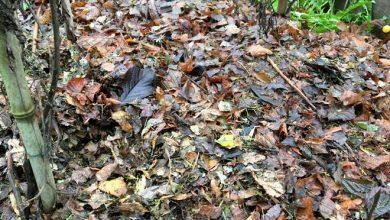 Photo of Comment couvrir le sol du potager en hiver ?