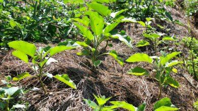 rendre une terre argileuse plus souple