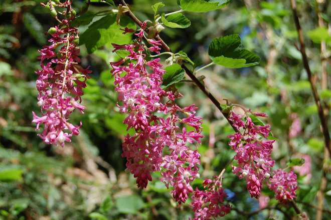 arbuste a floraison precoce