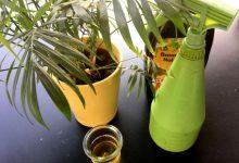 traitement des pucerons au savon noir