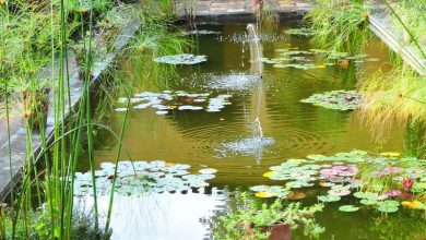 Photo of Comment nettoyer un bassin de jardin sans le vider ?