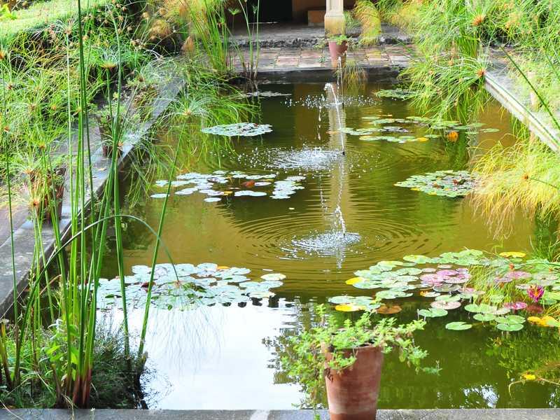 comment nettoyer un bassin de jardin sans le vider