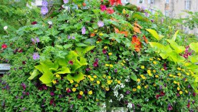 Photo of Quelles fleurs planter dans une jardinière ?