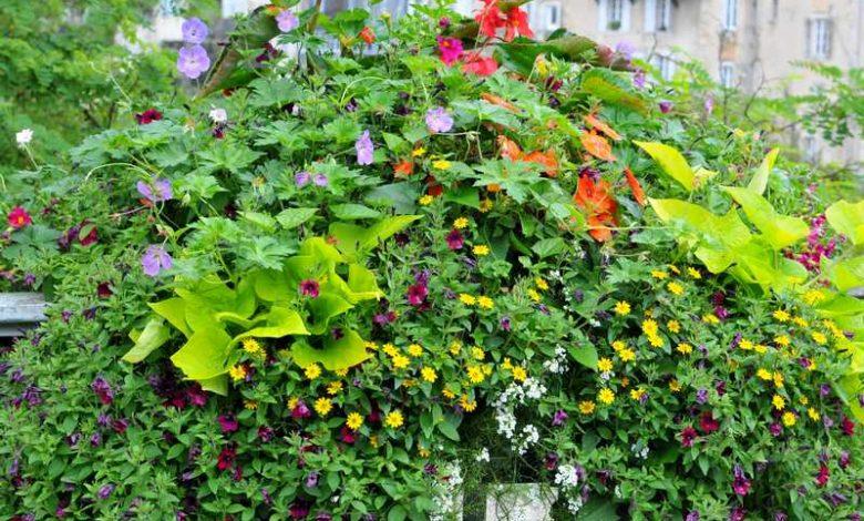 fleurs pour jardiniere