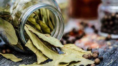 Photo de Ces aromatiques s'invitent en cuisine !