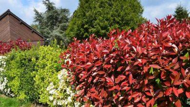Photo of 5 principes pour créer un jardin vivant