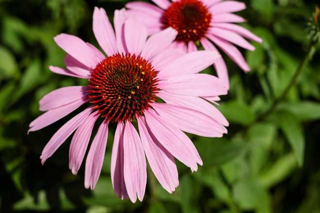 plante plein soleil sans entretien