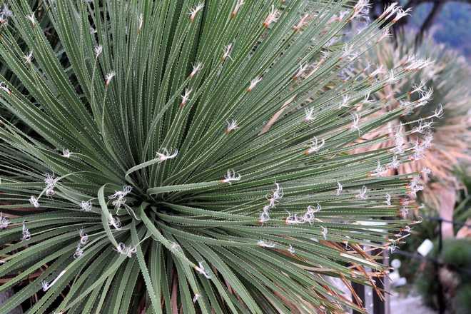 plantes grasses exterieur resistant au gel