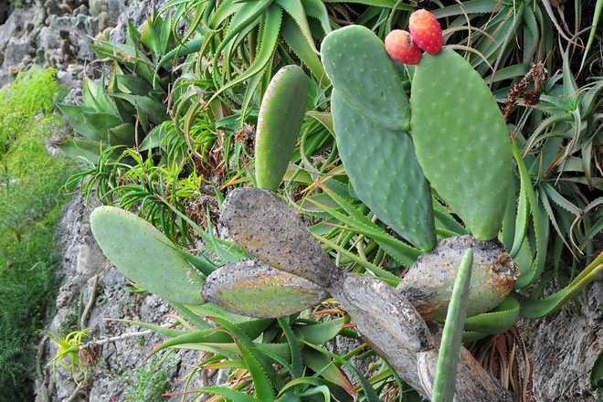 plantes grasses resistant au froid