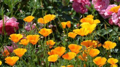 Photo de 6 plantes fleuries pour le plein soleil