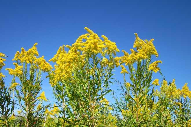 plantes vivaces fleuries plein soleil
