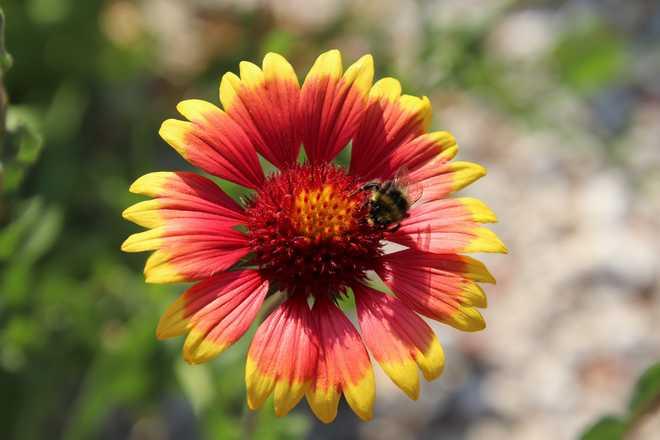 plantes vivaces plein soleil sans arrosage