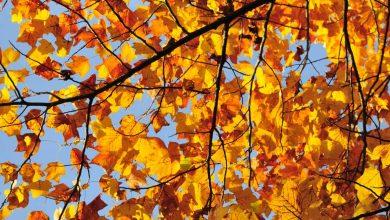 Pourquoi les feuilles des arbres changent de couleur