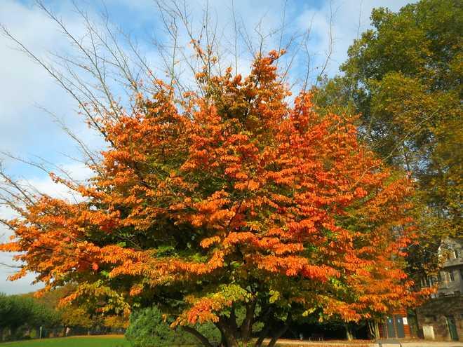 Pourquoi les feuilles rougissent en automne