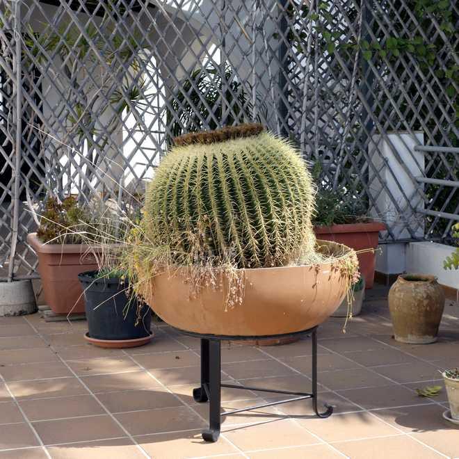 arrosage des cactus