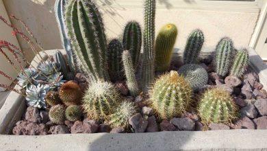 cactus arrosage