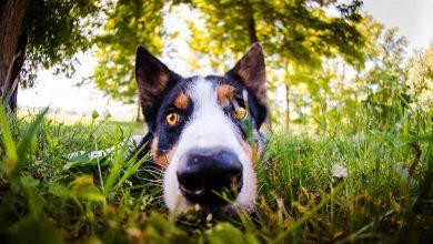 Photo de 8 plantes toxiques pour les chiens