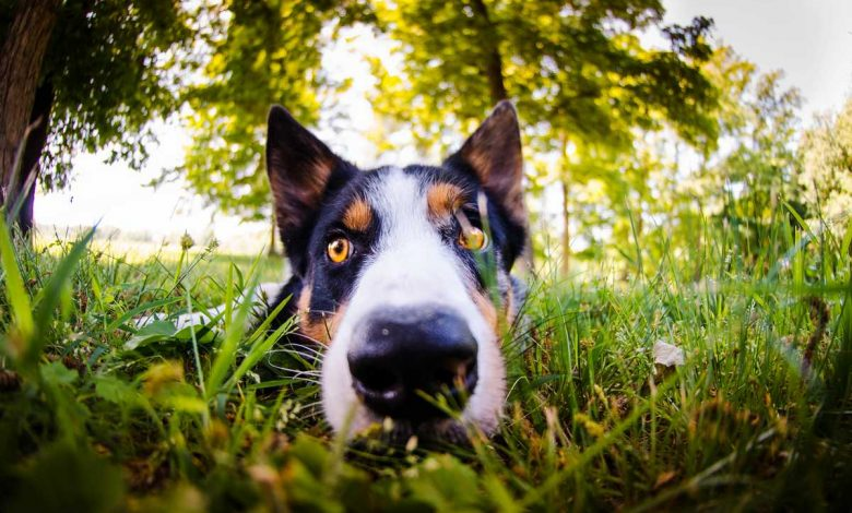 plantes toxiques chiens
