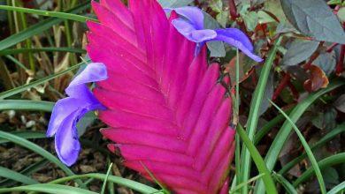 Photo de Le Tillandsia : Une plante sans racines !