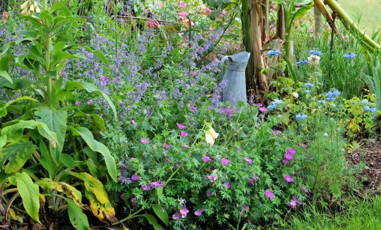 composition d un massif de plantes vivaces