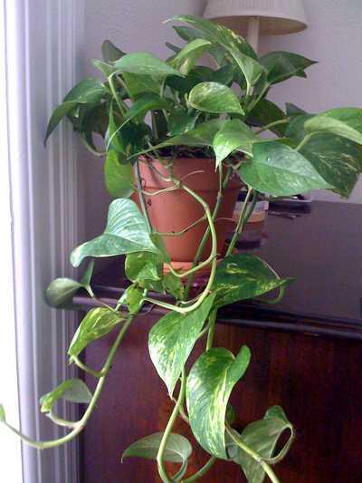 dormir avec une plante verte dans sa chambre
