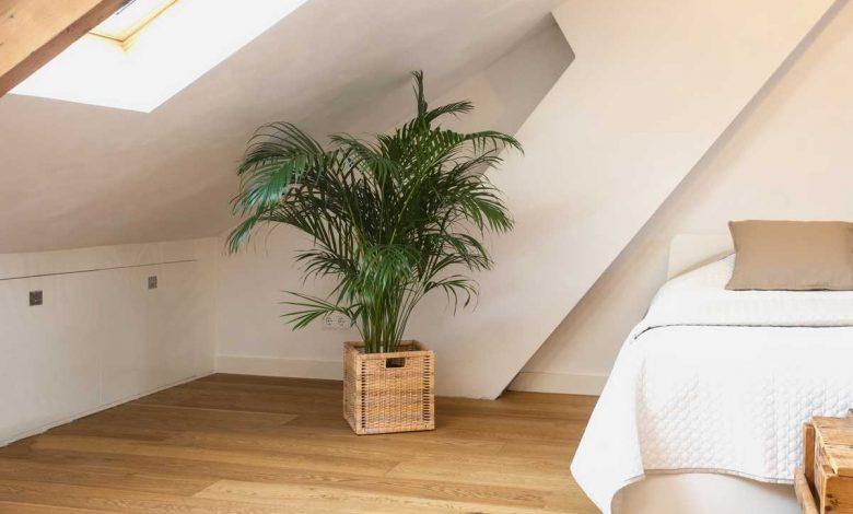 plante verte dans une chambre