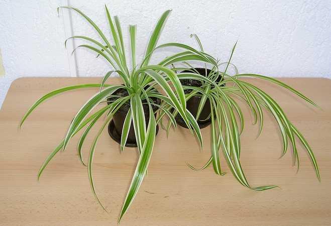 plante verte dans une chambre à coucher
