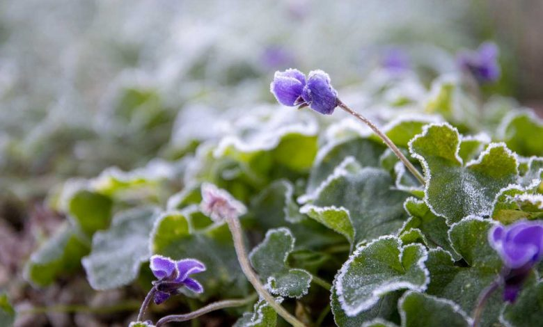 que faire au jardin avant l hiver
