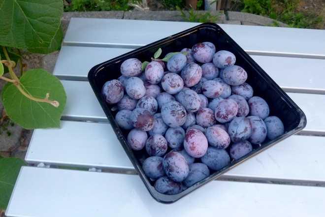 types de prunes