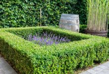planter une bordure de buis