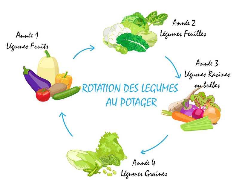 rotation des légumes potager en carré
